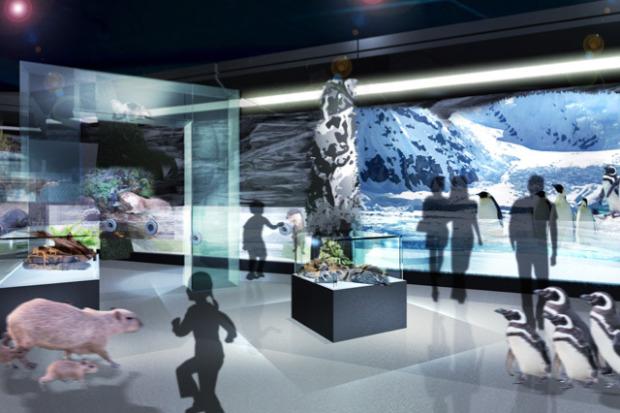 dmm-aquarium04