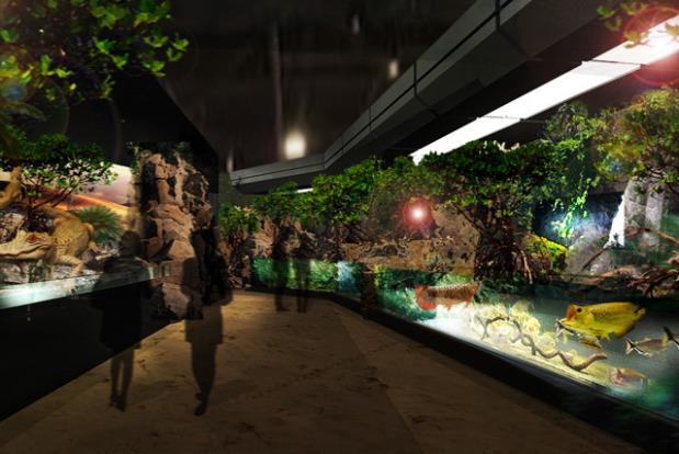 dmm-aquarium05